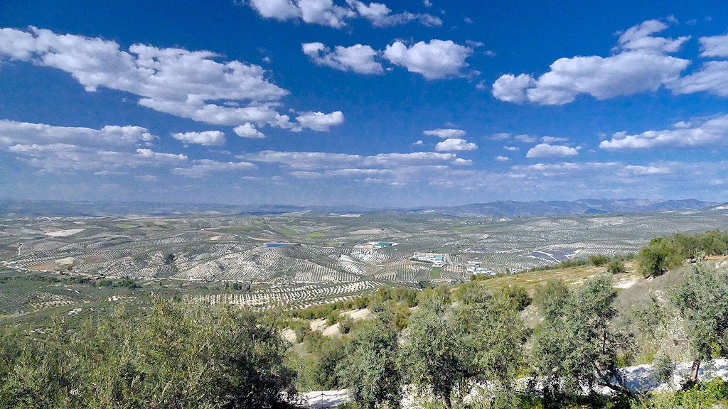 Les oliveraies Ubeda